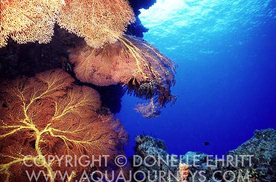 Solomon Islands Seascape
