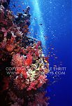 Red Sea underwater seascape